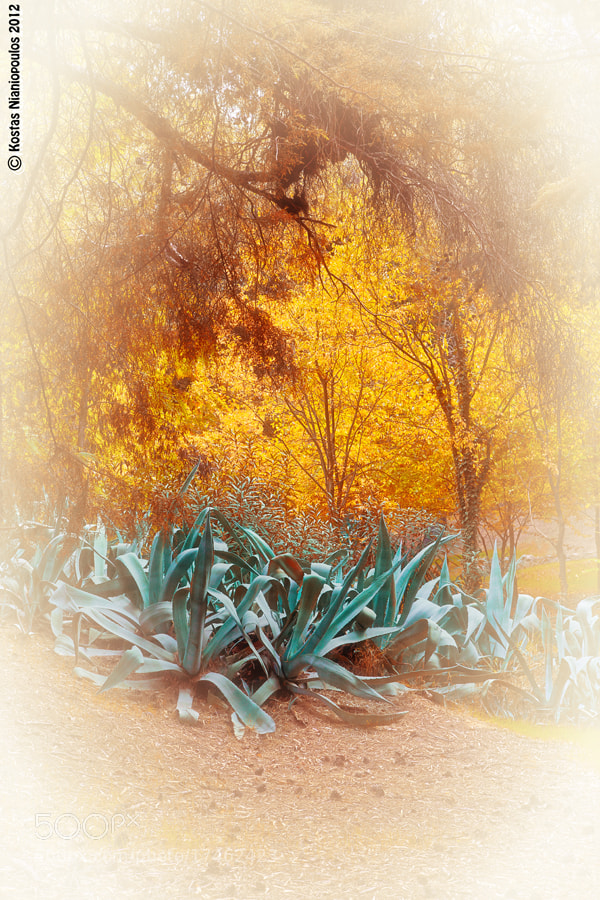 Photograph Dreamy Autumn by Kostas Nianiopoulos on 500px