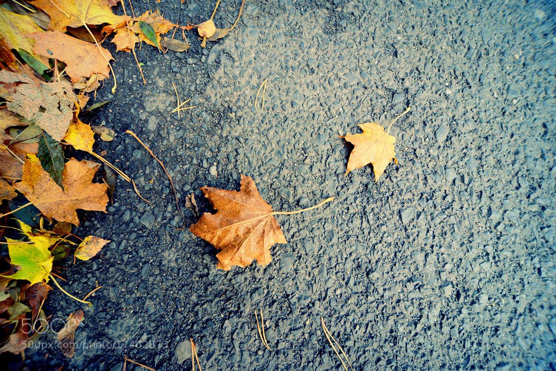 Photograph *** October *** by Konstantin Tilikin on 500px