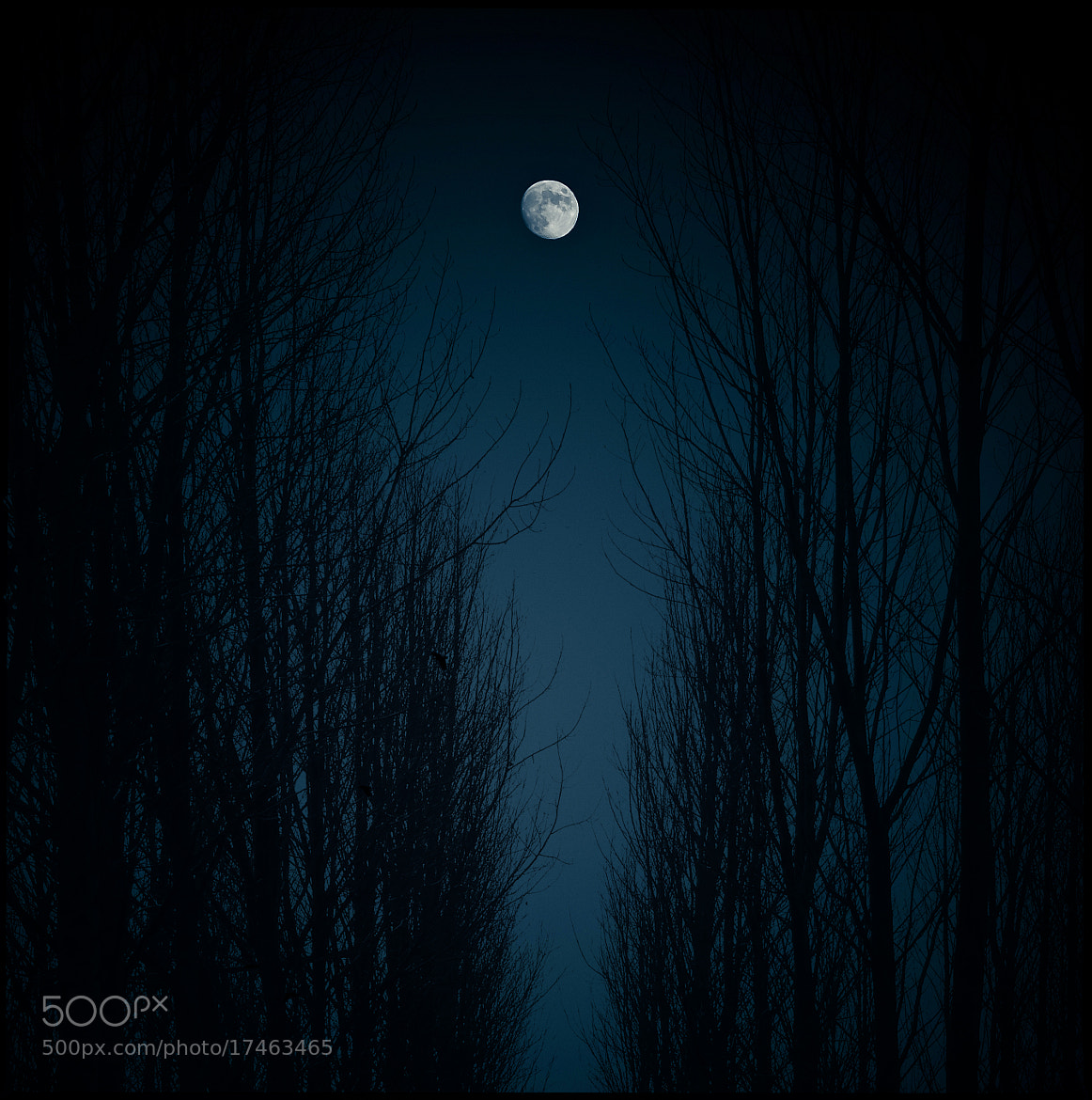 Photograph Moonlit Night by Luis Mariano González on 500px