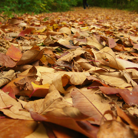 Bed of Leaves, Canon POWERSHOT SD1100 IS