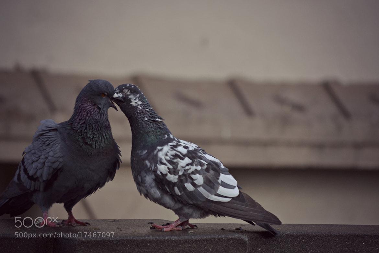 Photograph love birds.. by Shakya Richa on 500px