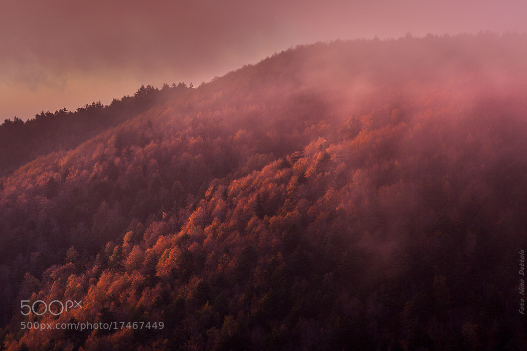 Photograph Autumn pink fog by Nino Dattola on 500px