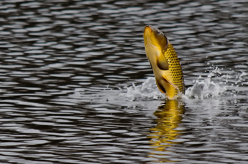 Photograph Big fish by CHRISTIAN GUERDER on 500px