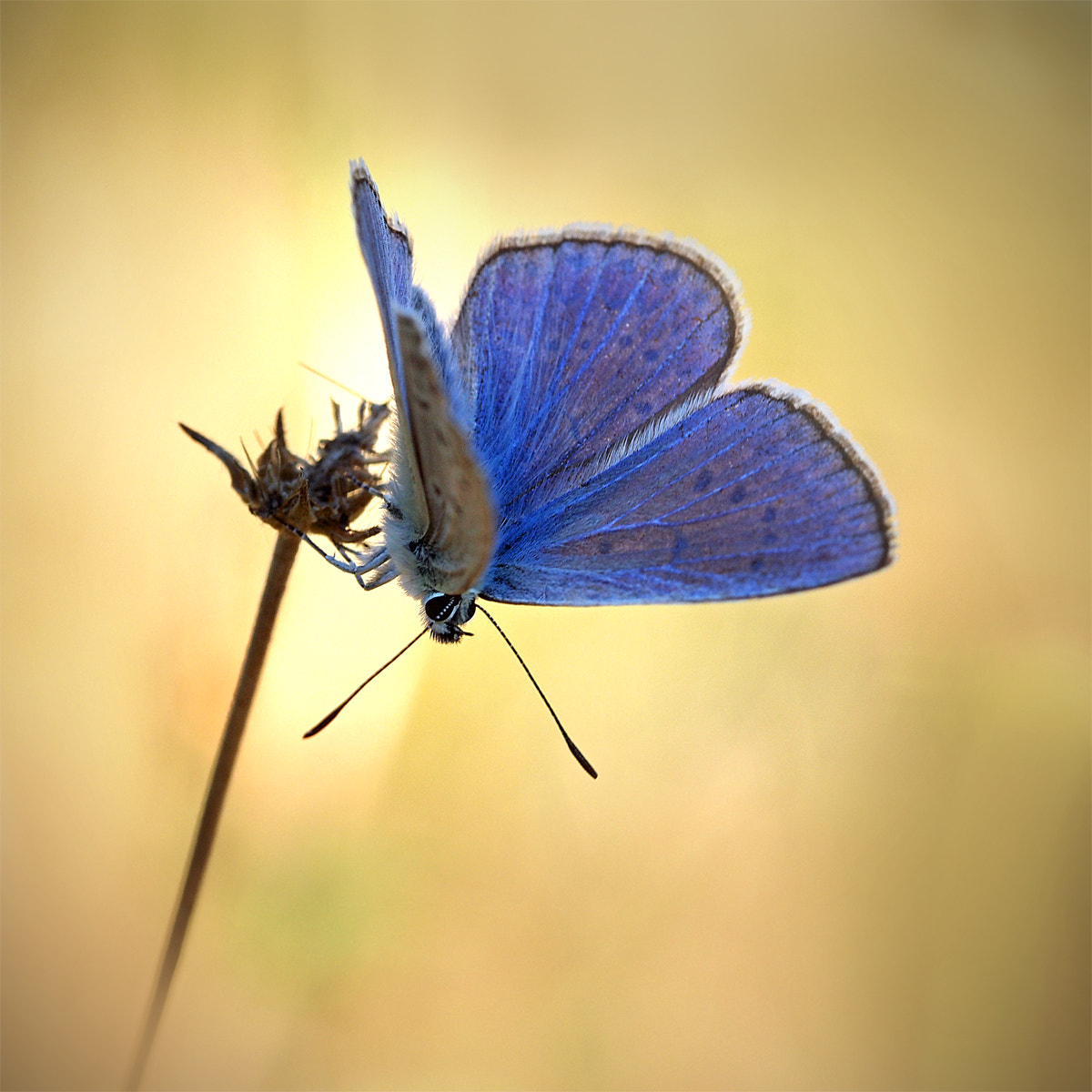 Photograph small butterfly by ivo pandoli on 500px