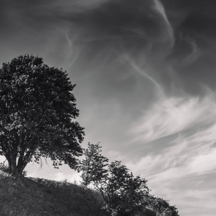 tree on a hill, Sony ILCE-7RM2, Tamron SP 70-200mm F2.8 Di USD