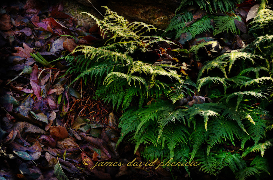 Fern and dead leaves.