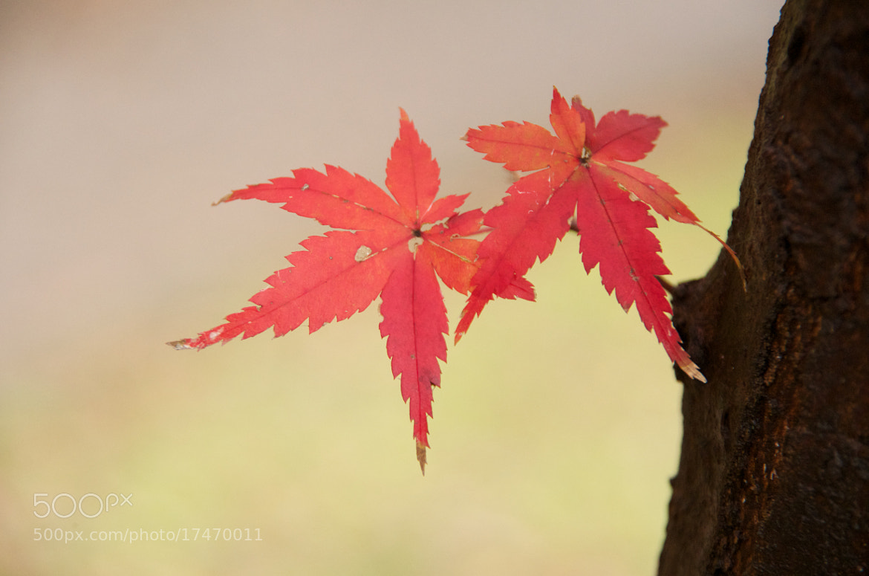 Photograph A piece of fall by Mitch Fujiwara on 500px