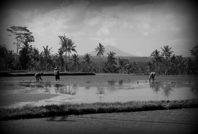 Photograph Bali by Sonia Preuss Gambier on 500px