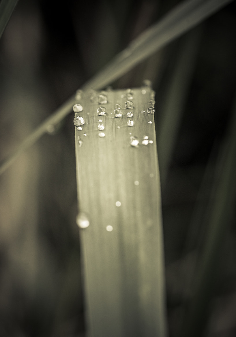Photograph After Rain  by Christos Chatzifotis on 500px