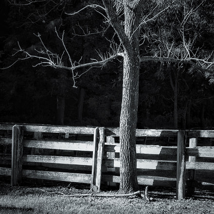 Tree by the fence, Canon EOS DIGITAL REBEL XS, Tamron AF Aspherical 28-200mm f/3.8-5.6