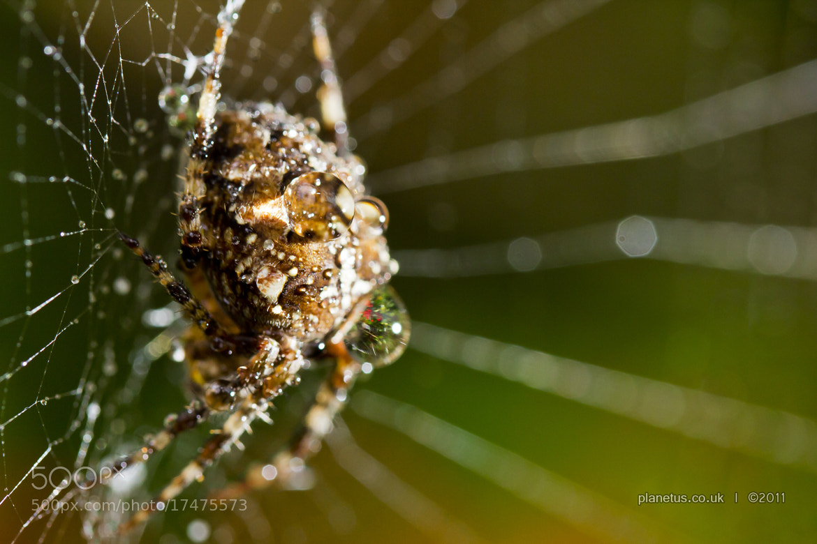 Photograph The Gossamer Lord by Keith Robinson on 500px