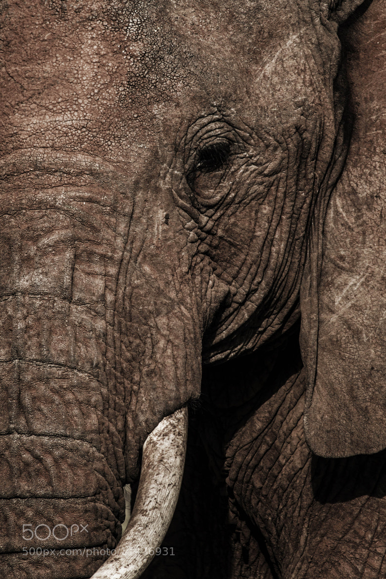 Photograph Elephant by Kathrine Webb on 500px