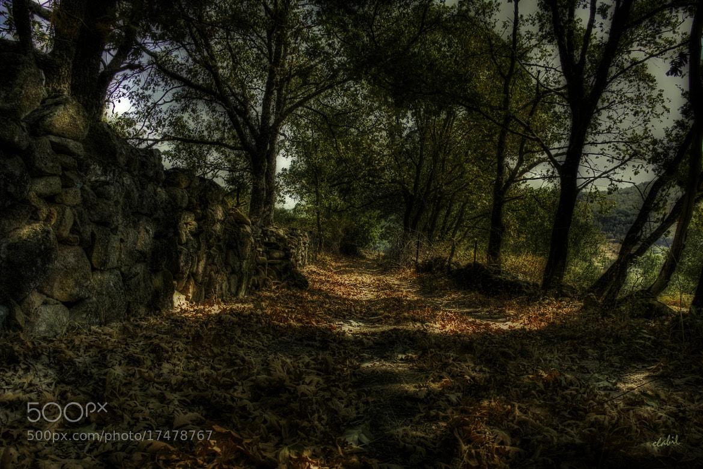 Photograph El camino by Eduardo Latorre on 500px