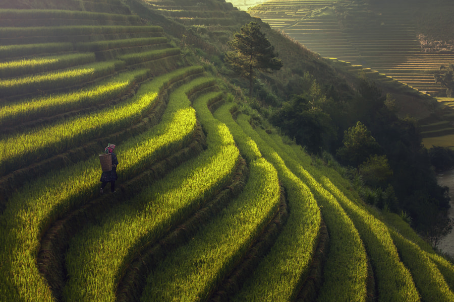 Beautiful Rice Terraces, South East Asia,Yenbai,Vietnam by Jakkree Thampitakkul on 500px.com