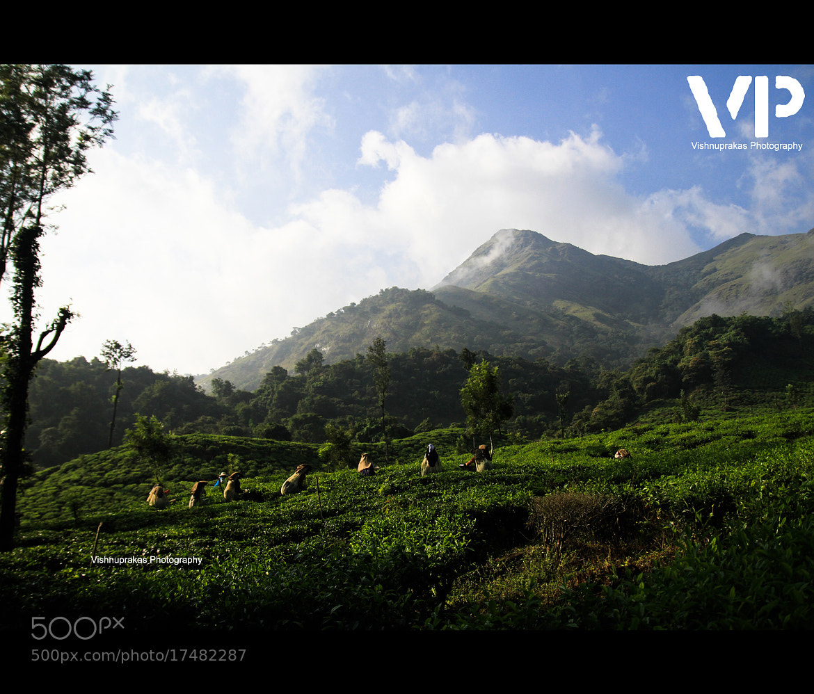 Photograph tea workers by vishnuprakas  on 500px