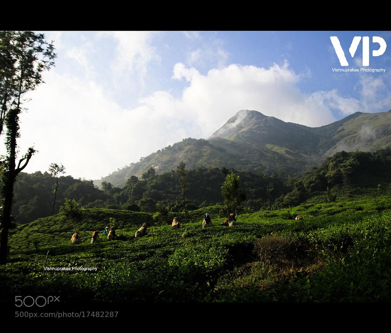 Photograph tea workers by vishnuprakas  on 500px