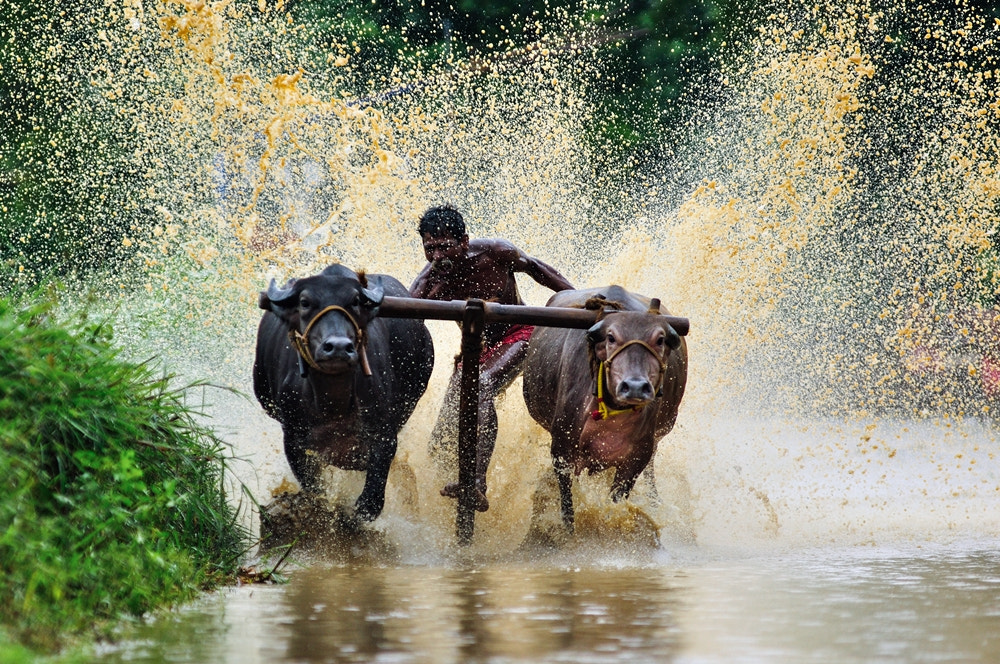 Photograph Bull Power by Ranjith Shenoy on 500px