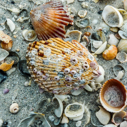shell gathering, Panasonic DMC-FZ35