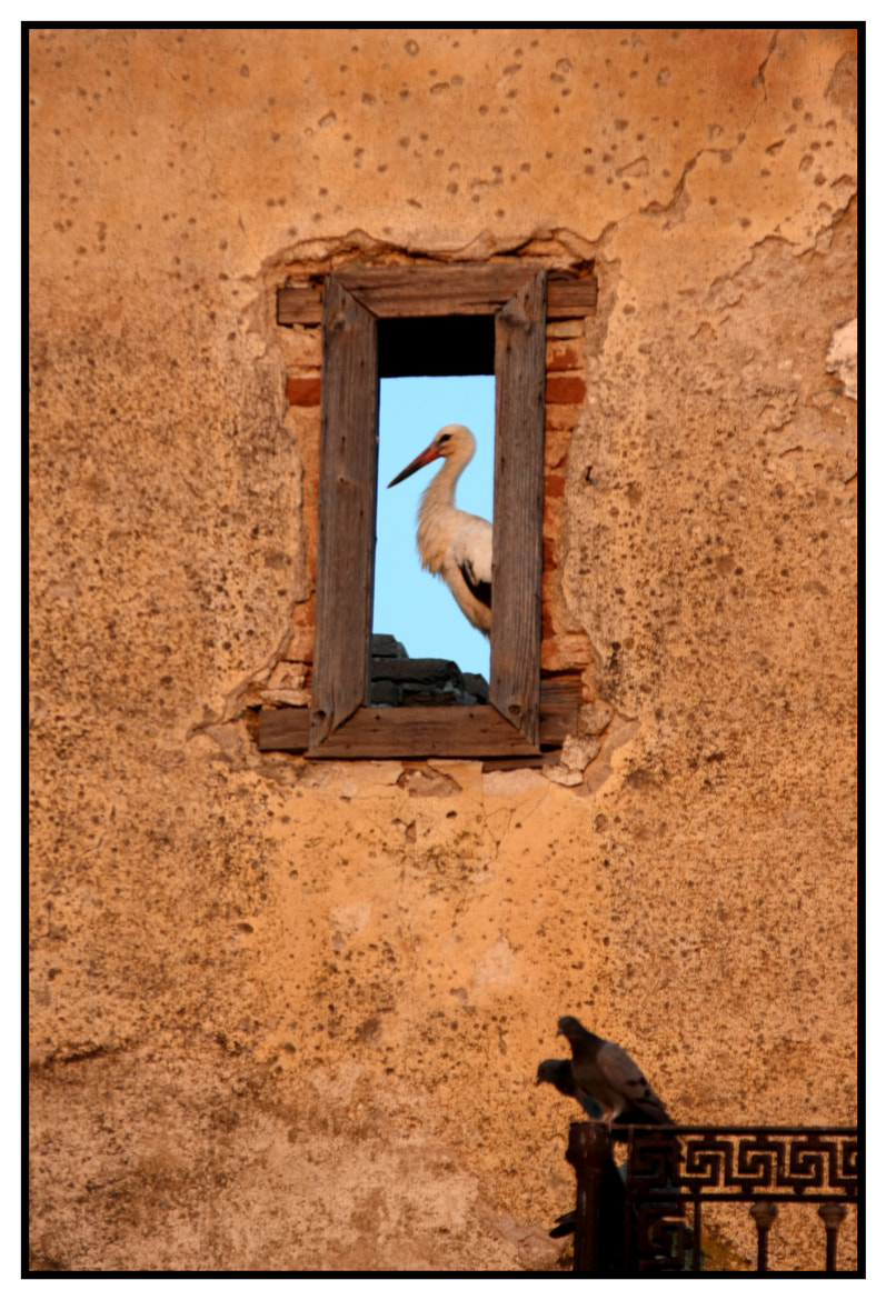 Photograph stork by Fotis Natsioulis on 500px