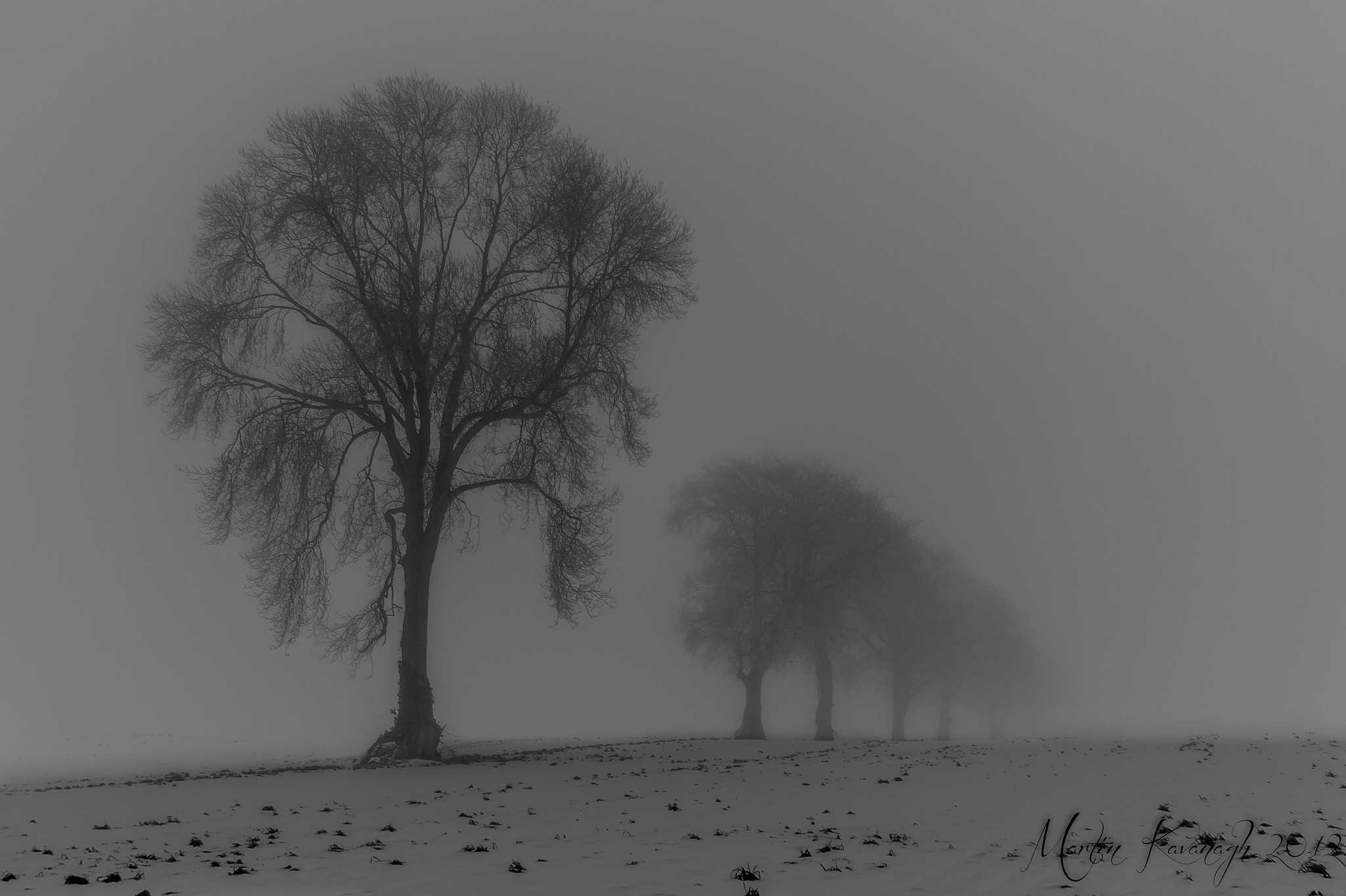 Photograph Trees in the mist... by Martin Kavanagh on 500px