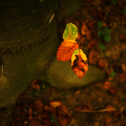 green, yellow, red, brown,, Sony SLT-A99V, Sony 35mm F1.4 G (SAL35F14G)