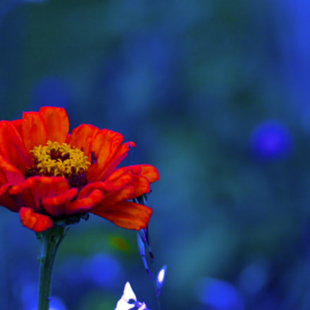 Red Flower by Night, Canon EOS 1000D