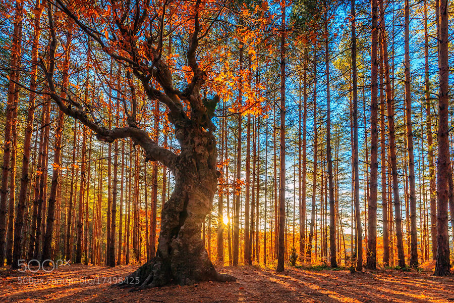 Photograph The King Of the Forest by Evgeni Dinev on 500px