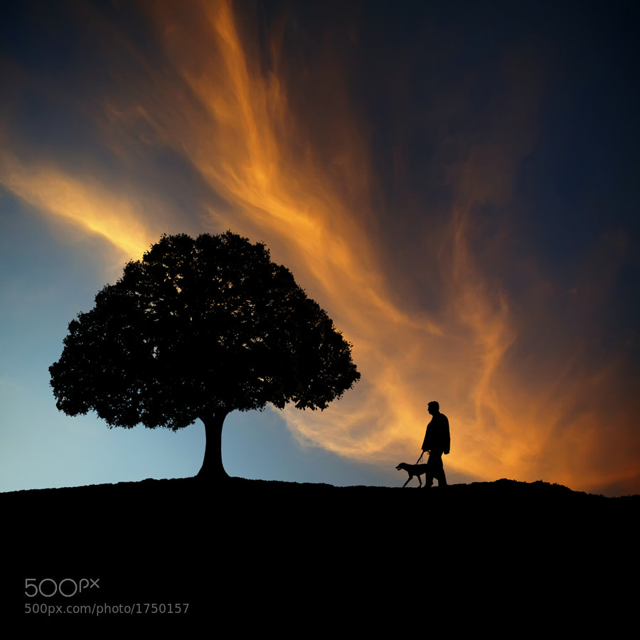 Photograph Silhouettes at Sunset by Carlos Gotay on 500px