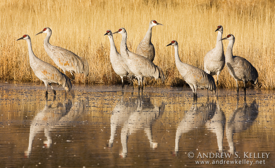 Photograph At the Crane Pool by Andrew Kelley on 500px