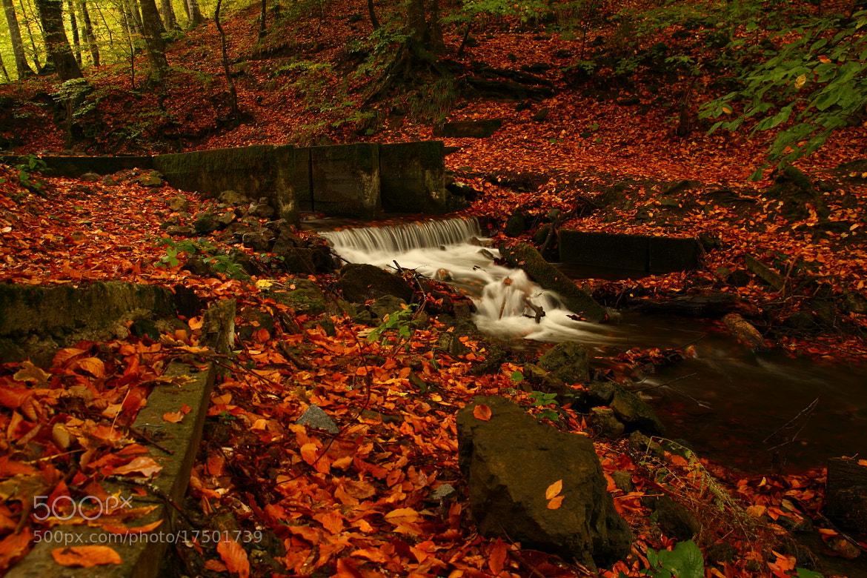 Photograph autumn fall by Zeynel Şanlı on 500px