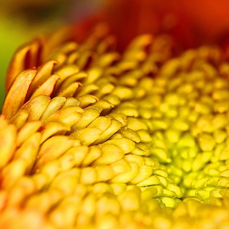 Photograph  Golden detail by Wibe-Jan Postma on 500px