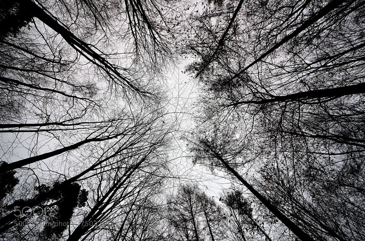 Photograph Tree top by Peter G. on 500px