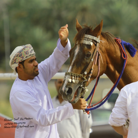 Omani style horse race, Canon EOS 7D, Canon EF 100-400mm f/4.5-5.6L IS USM