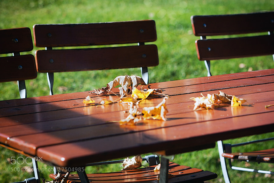 Fallen leaves on a wooden table