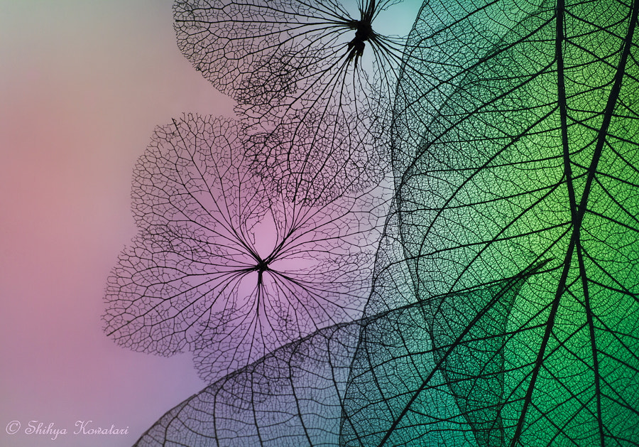 Patchwork of Flowers and Leafs by Shihya Kowatari on 500px.com