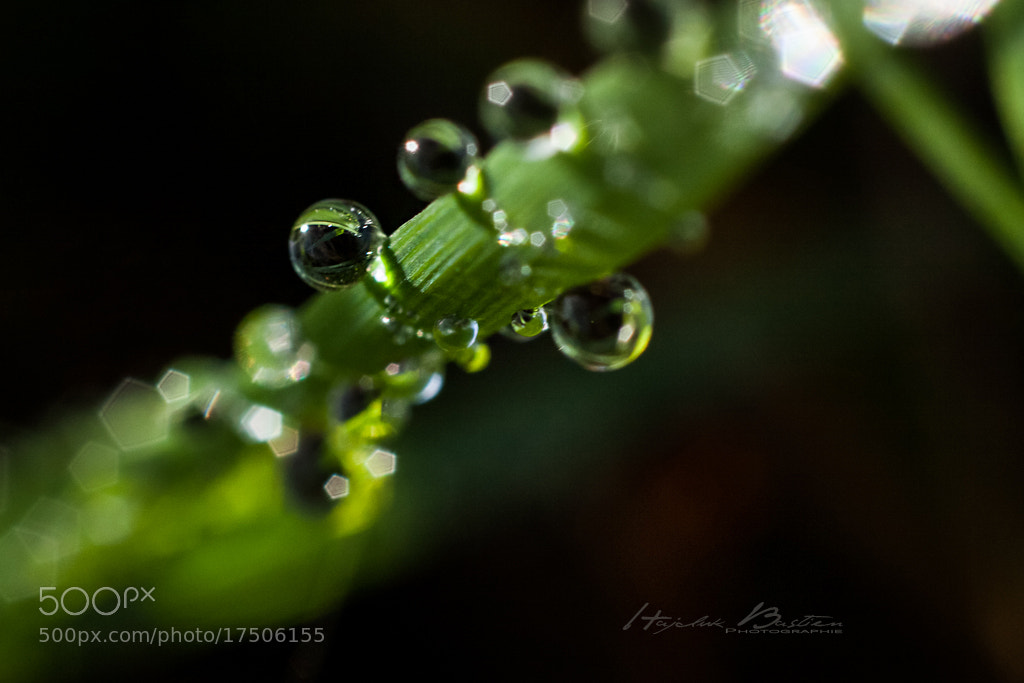 Photograph Dropz by Bastien HAJDUK on 500px