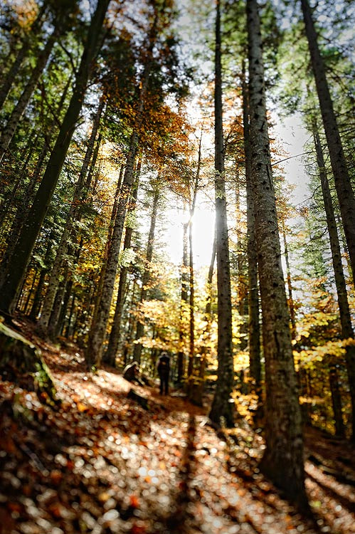 Photograph Forest in tilt-shift by Mirko Sotgiu on 500px