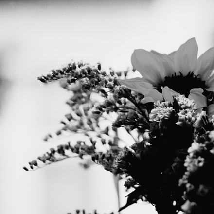 Flowers black and white, Sony DSC-RX10M2, Sony 24-200mm F2.8