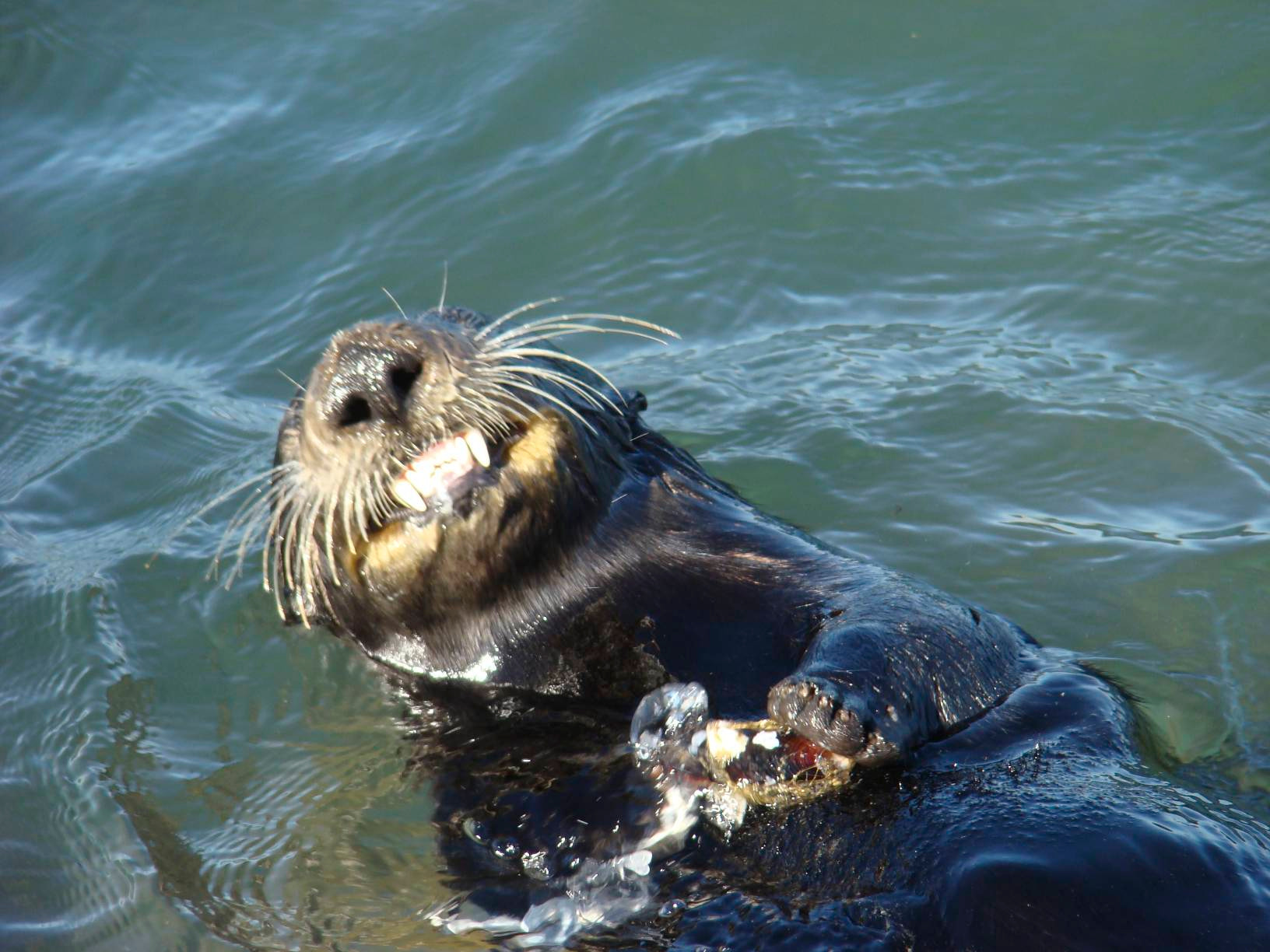 Photograph Sea Otter by Rick Skillin on 500px