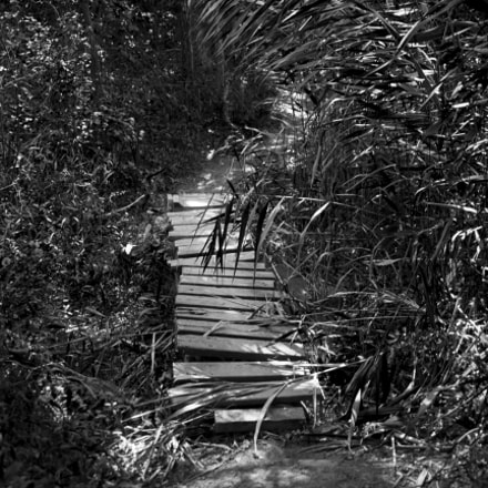 The Path Less Taken, Canon EOS REBEL T3I, Canon EF 24mm f/2.8