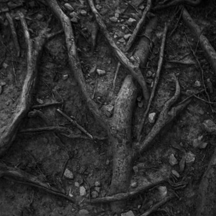 Roots, Canon EOS REBEL T3I, Canon EF 24mm f/2.8