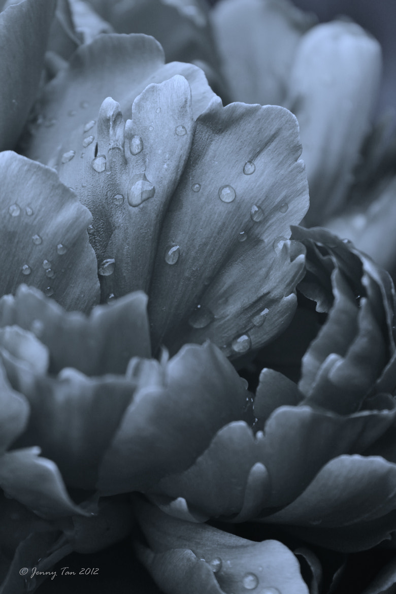 Photograph layers & droplets  by Jenny Tan on 500px