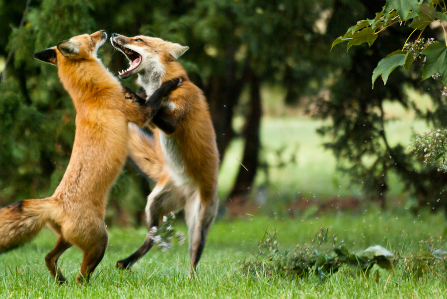 Photograph Sibling Rivalry by Ken Smith on 500px