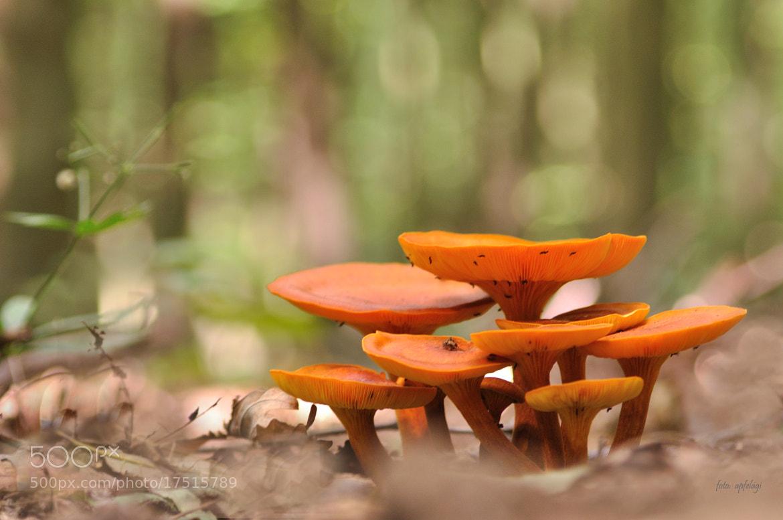 Photograph Mushroom family by Ágnes Apfel on 500px