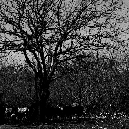 sheep in shadows I, Canon POWERSHOT SX160 IS