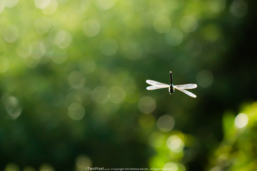 Photograph Bokeh & Flying stick by Matthew Barnett on 500px