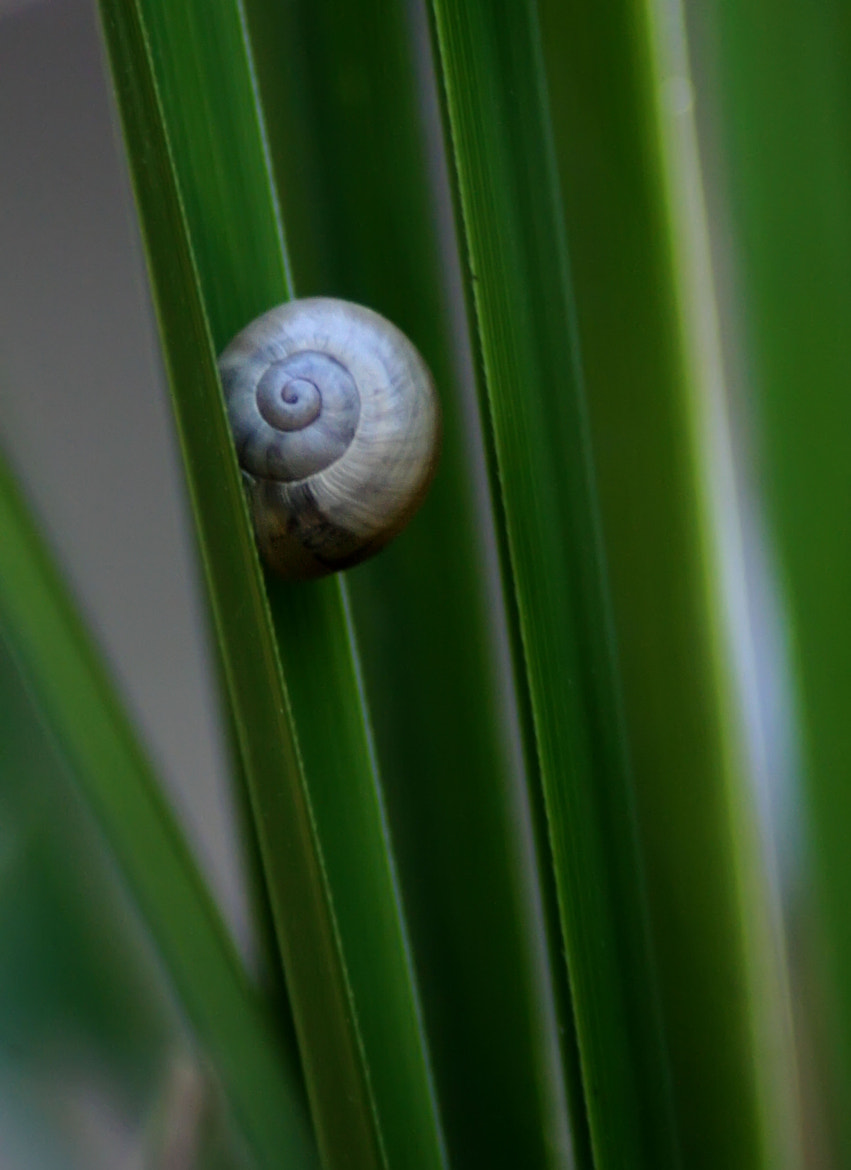 Photograph Caracol by Jaime VilchesFD on 500px