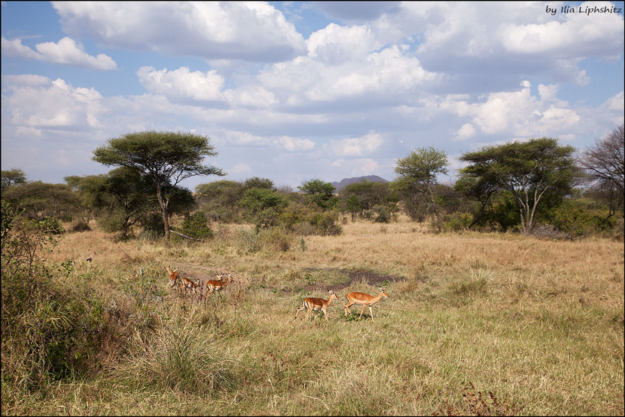 Landscapes of Serengeti №8