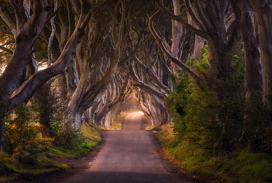 The King's Road by Daniel F.