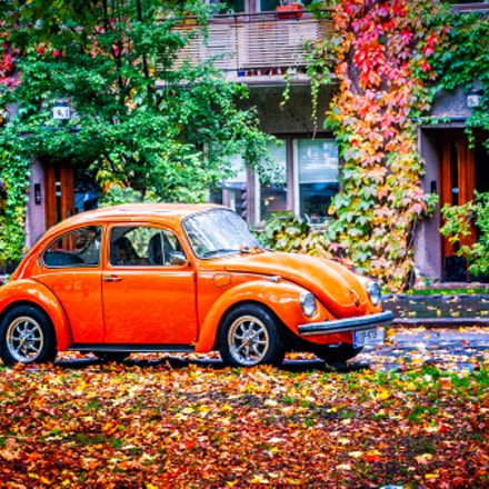 Fall beetle, Sony DSLR-A700, Tamron SP AF 28-75mm F2.8 XR Di LD Aspherical IF